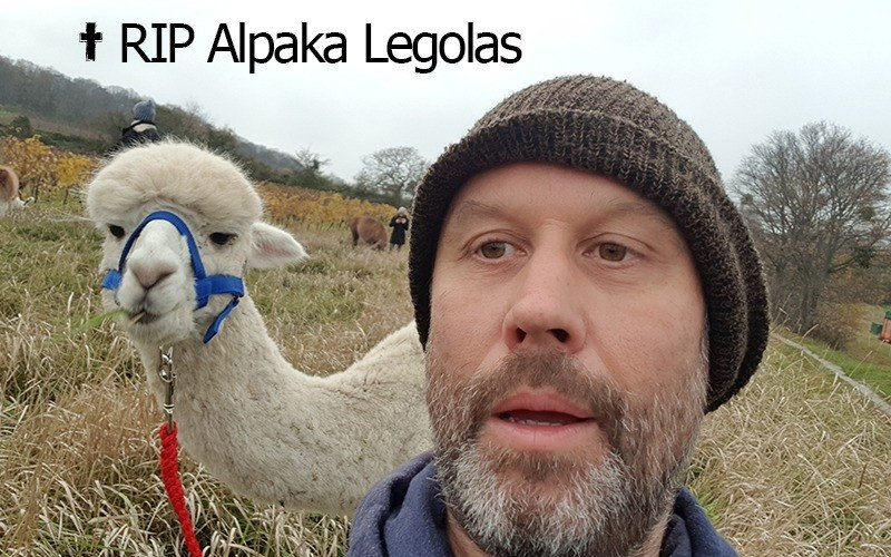 Foto Alpaka